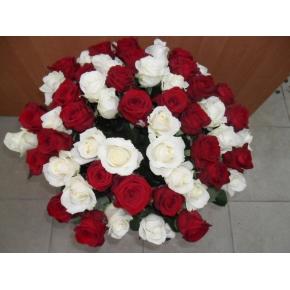 51 роза двух цветов  50см